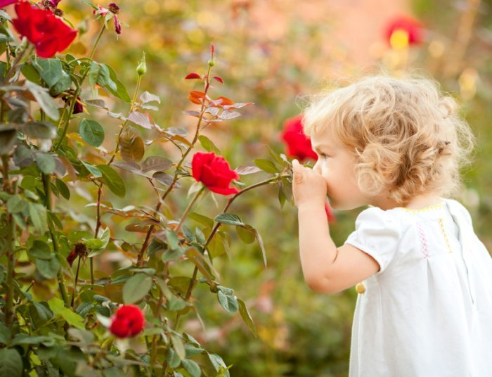 Know About Roses