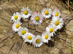 Daisy Facts: Heart made of daisies.
